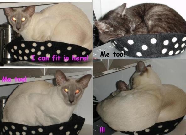 CatsInDaThing13