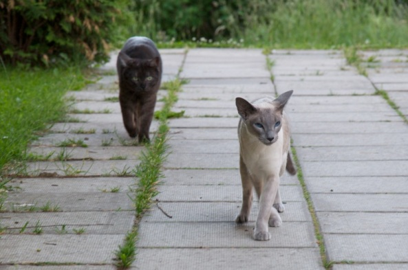 Pretty ladies on a catwalk