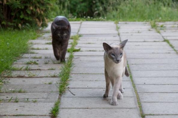 Pretty ladies on a catwalk