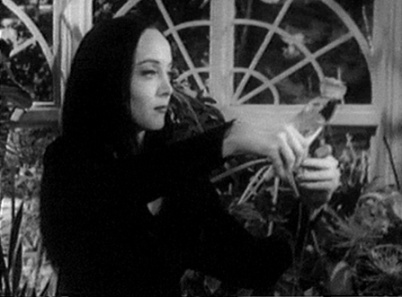 Morticia trims the roses; on the other end