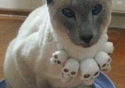 plenty of skulls