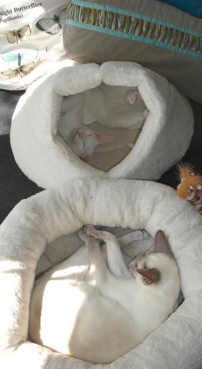 Albert sleeping in style