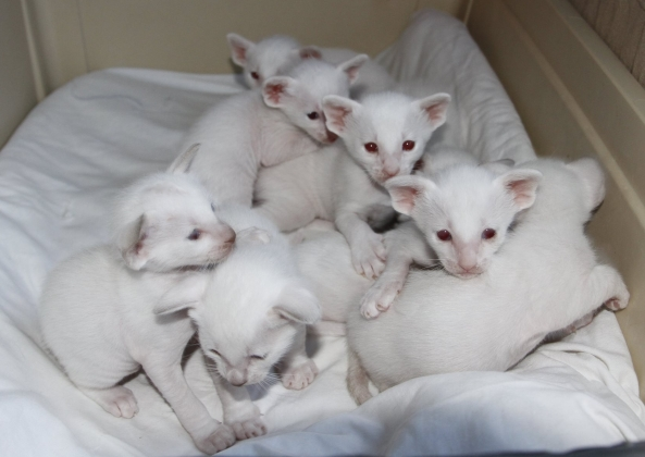 Casper's and Maria's kittens: the pile of cuteness, 3 weeks old