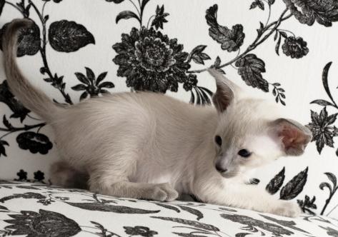 Eleonora, 6 weeks old