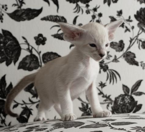 Etsuko, 6 weeks old