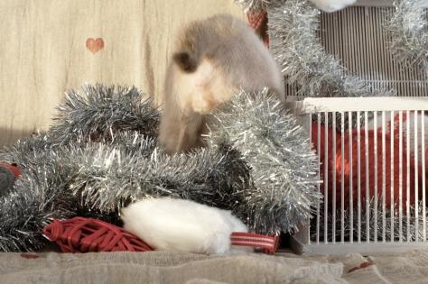 Merry Christmas according to LillMupp